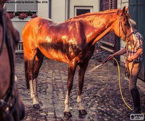 Rompicapo di Lavare un cavallo