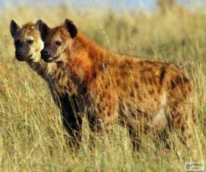 Rompicapo di Le iene