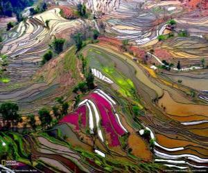 Rompicapo di Le terrazze di Yunnan, Cina