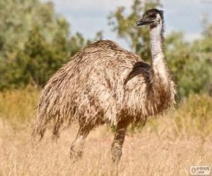 Rompicapo di L'emù è il secondo uccello più grande