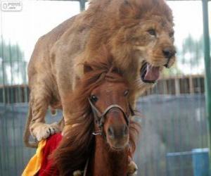 Rompicapo di Leone e il cavallo facendo le sue prestazioni di circo