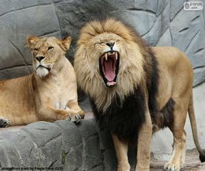 Rompicapo di Leonessa e leone