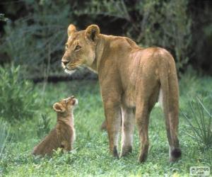 Rompicapo di Leonessa insieme al suo bimbo