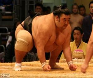 Rompicapo di Lottatore di sumo pronto per il combattimento