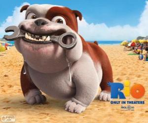 Rompicapo di Luiz, un bulldog