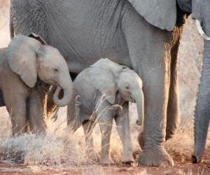 Rompicapo di Mamma controllare il piccolo elefante