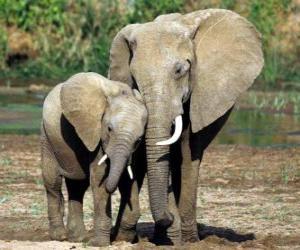 Rompicapo di Mamma controllare il piccolo elefante con l'aiuto della sua proboscide