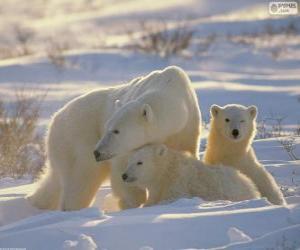 Rompicapo di Mamma orsa con cuccioli
