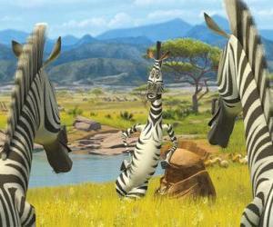 Rompicapo di Marty parlando di altre zebre