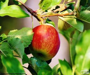 Rompicapo di Mela nell'albero