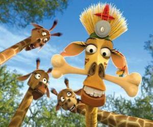 Rompicapo di Melman la giraffa, dissimulata sotto gli occhi curiosi di giraffe altri