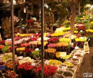 Rompicapo di Mercato dei fiori, Amsterdam, Paesi Bassi