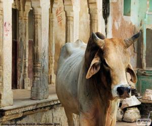 Rompicapo di Mucca Santa, India
