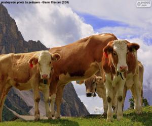 Rompicapo di Mucche