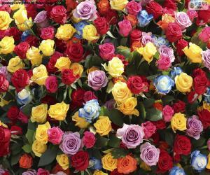 Rompicapo di Multi-colored roses