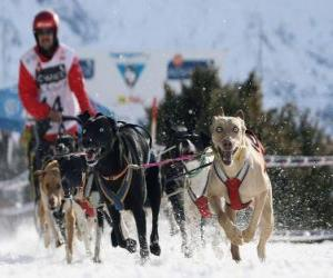 Rompicapo di Mushing