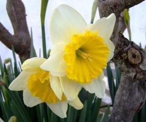 Rompicapo di Narciso