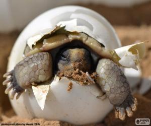 Rompicapo di Nascita di una tartaruga
