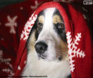 Rompicapo di Natale cane