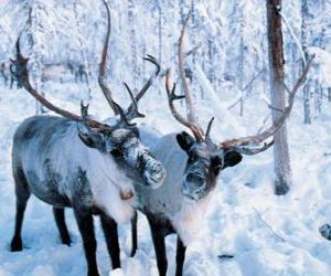 Rompicapo di Natale delle renne nella foresta