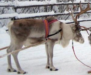 Rompicapo di Natale, renne tirando una slitta