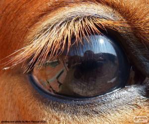 Rompicapo di Occhio del cavallo