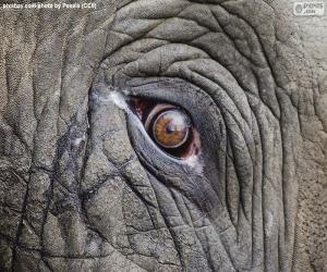 Rompicapo di Occhio dell'elefante