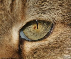 Rompicapo di Occhio di gatto