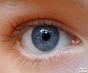 Rompicapo di Occhio umano