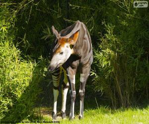 Rompicapo di Okapi