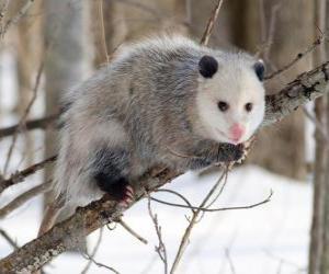 Rompicapo di Opossum