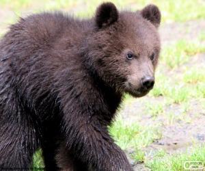 Rompicapo di Orsetto, cucciolo di orso