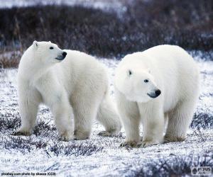 Giochi di orsi polari