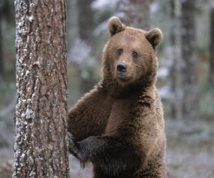 Rompicapo di Orso bruno europeo in piedi appoggiata su un albero