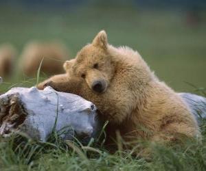 Rompicapo di Orso che riposa sul tronco