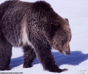 Rompicapo di Orso Grizzly