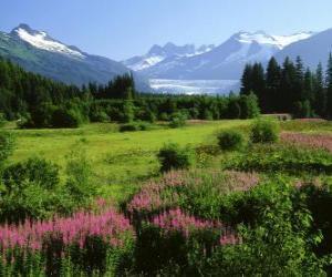 Rompicapo di Paesaggio Alaska in estate