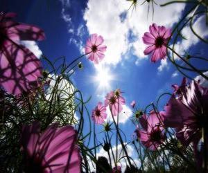 Rompicapo di Paesaggio con fiori