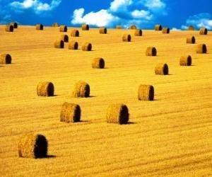 Rompicapo di Paesaggio della campagna in estate