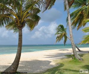 Rompicapo di Palme in riva al mare