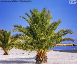 Rompicapo di Palme sulla spiaggia
