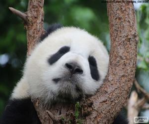 Rompicapo di Panda dormendo