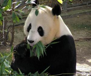 Rompicapo di Panda gigante