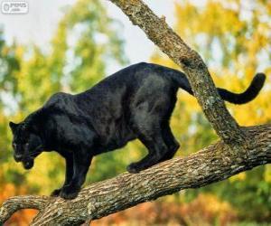 Rompicapo di Pantera nera su un ramo di un albero