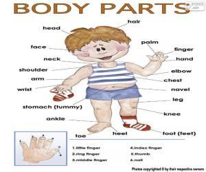 Rompicapo di Parti del corpo in inglese
