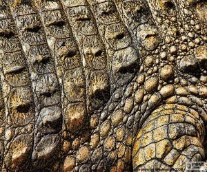 Rompicapo di Pelle di coccodrillo