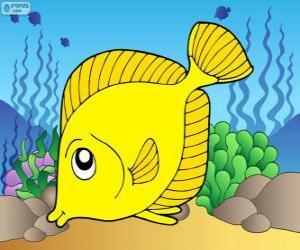 Rompicapo di Pesce tropicale