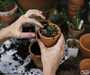 Rompicapo di Piantare un cactus