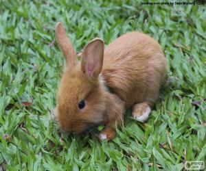 Rompicapo di Piccolo coniglietto