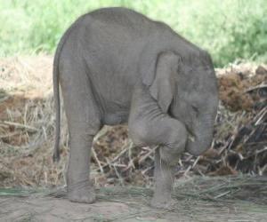 Rompicapo di Piccolo elefante